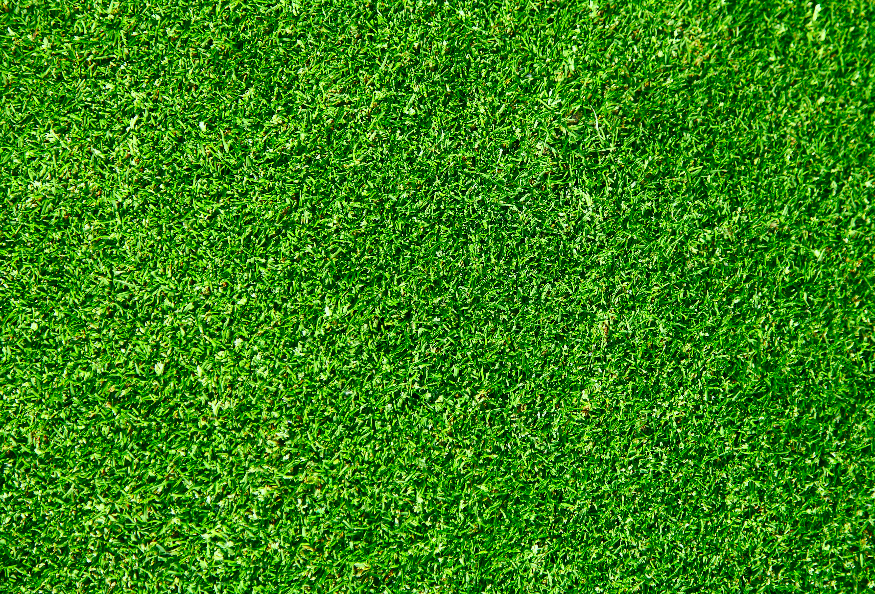 ... February 29, 2012 at 3537 × 2400 in seamless-green-grass-texture.jpg
